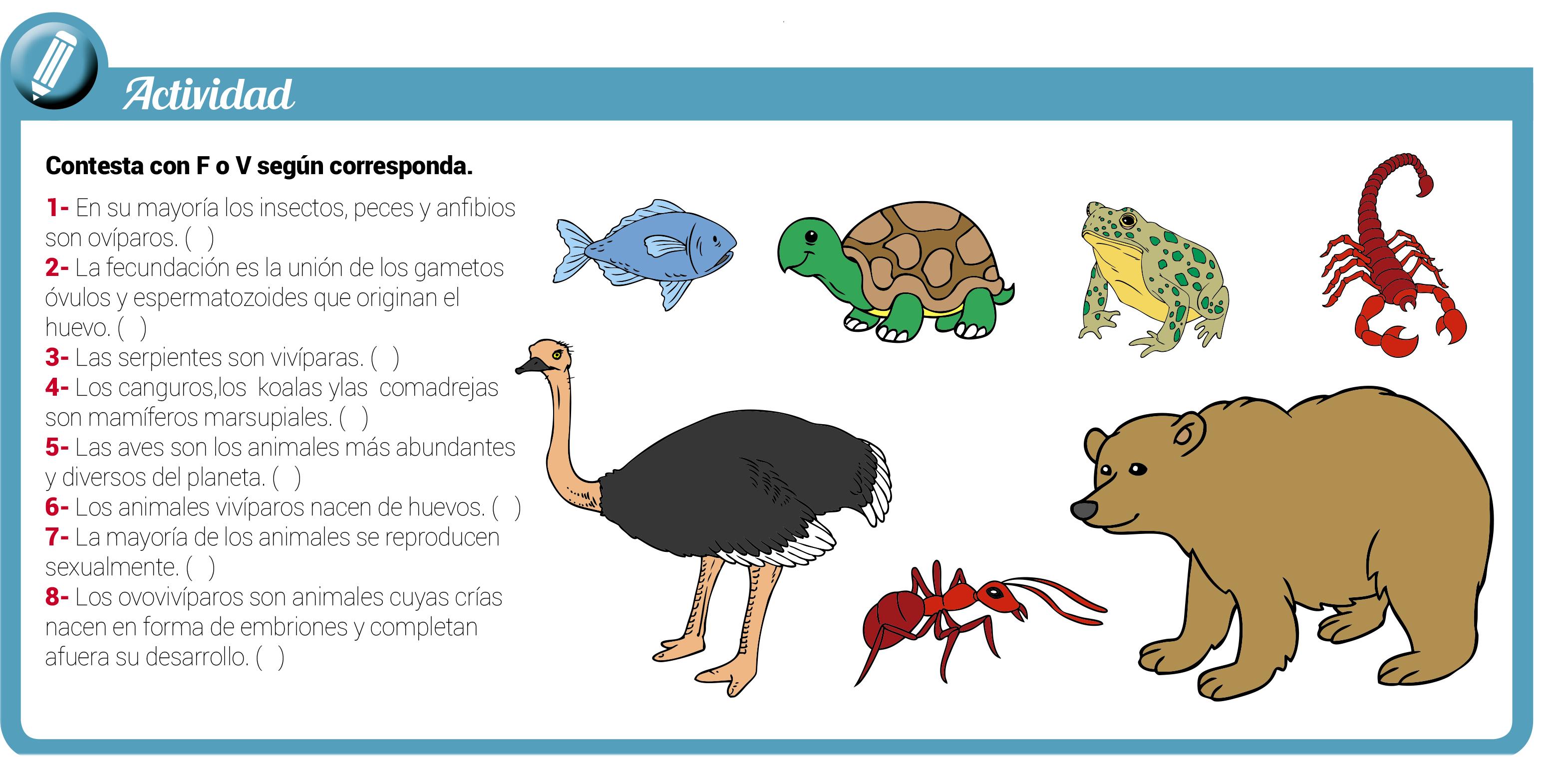La Reproducción Sexual En Animales Escolar Abc Color