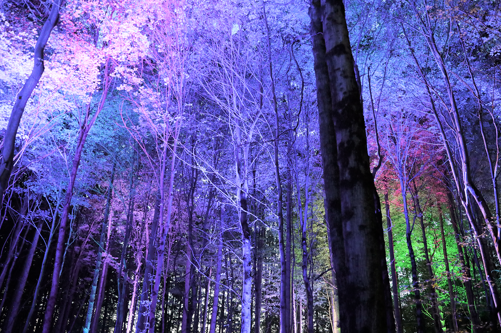 Halloween Art Shows For 2020 In Michigan Michigan forest turning into haunted Halloween sensory light show
