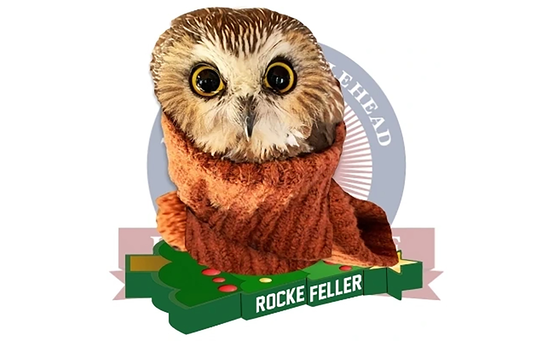 yyva28xolljrim https www syracuse com entertainment 2020 11 owl found in rockefeller christmas tree from cny inspires a bobblehead for charity html