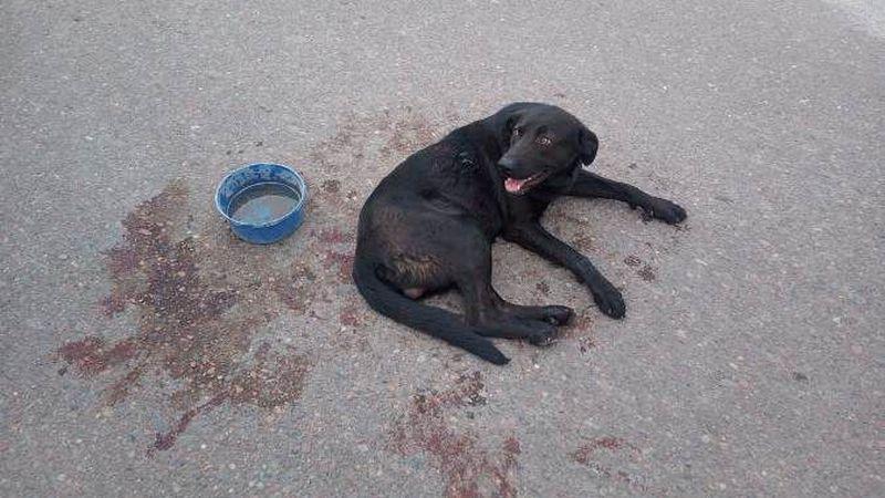 Maltrato animal: una mujer encadenó a su perro al auto y lo arrastró durante siete cuadras | TN
