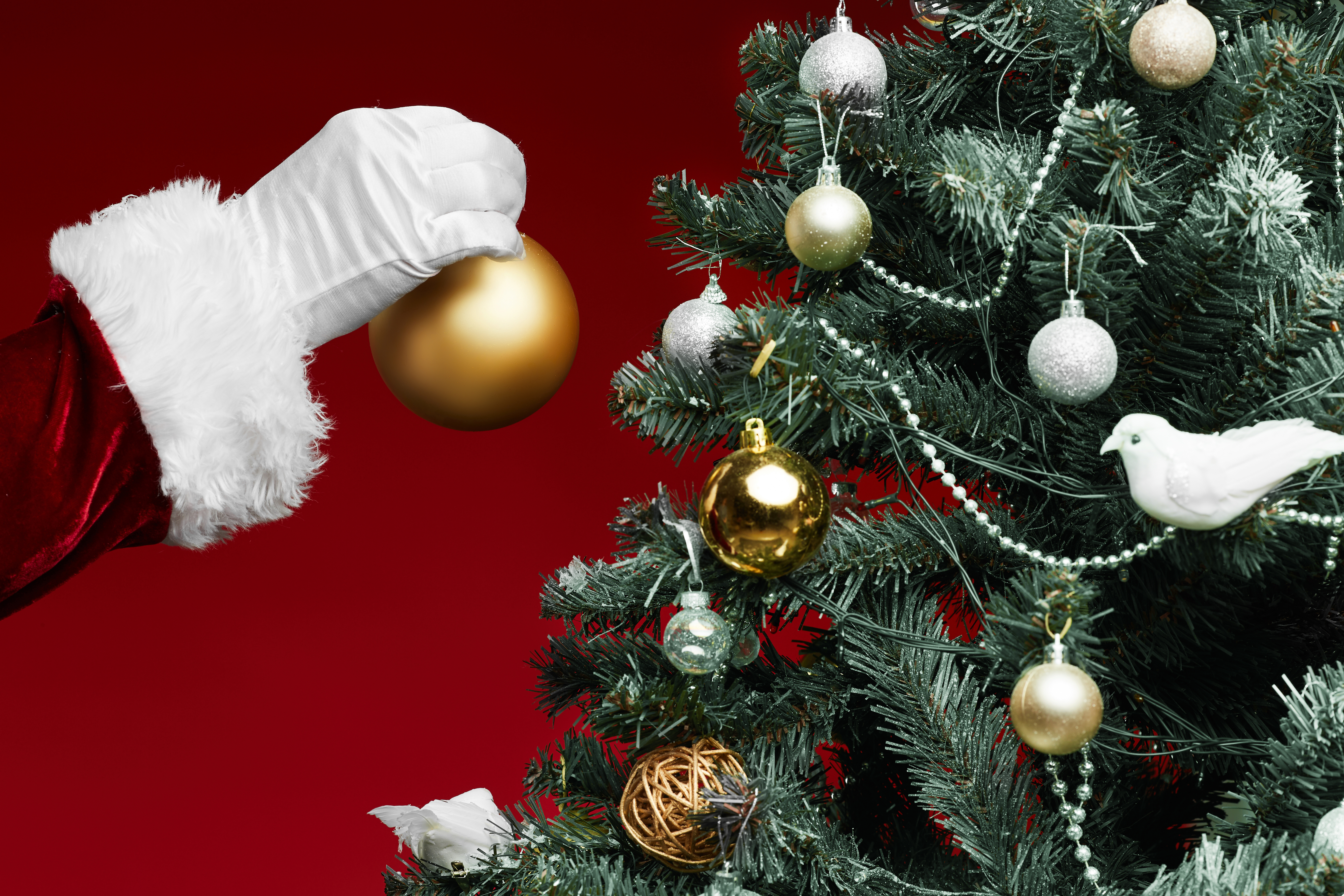 How Bad Are Christmas Trees For The Environment Popular Science