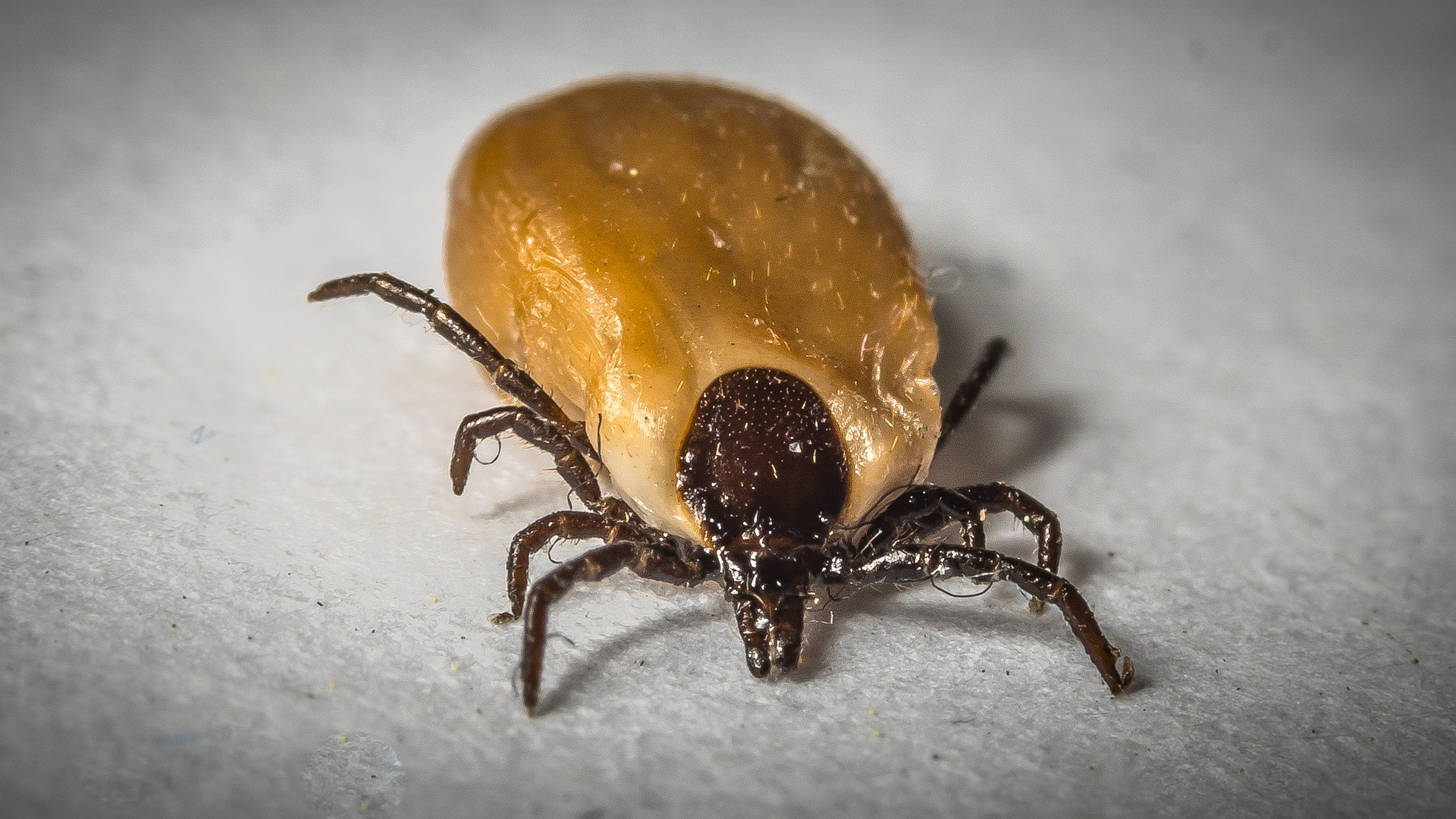 Vaccine promises to prevent Lyme disease in humans