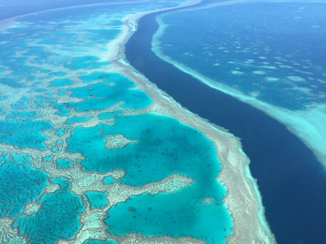 Lab-grown algae might help save corals from climate change