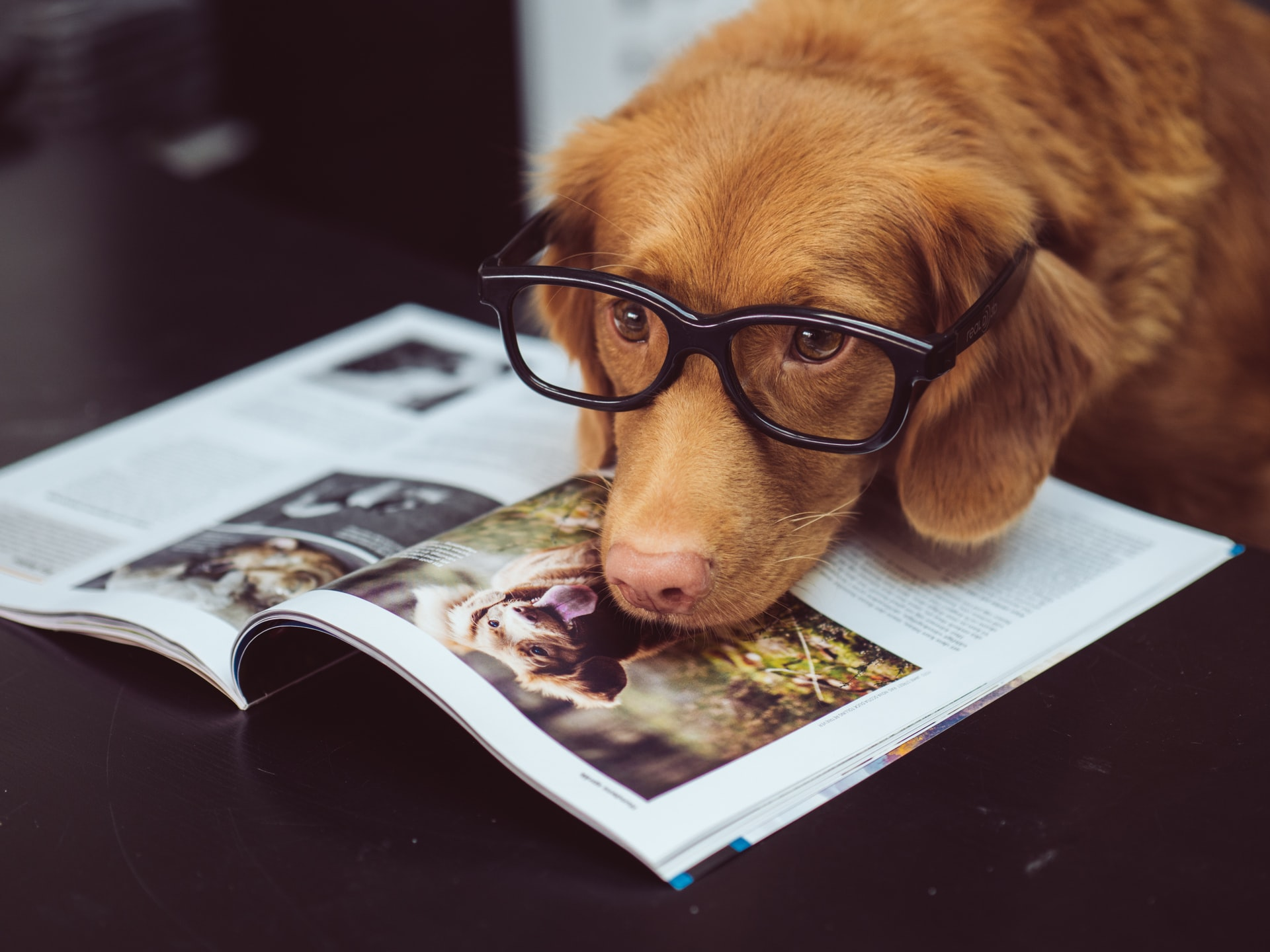 How to know if your dog is actually smart