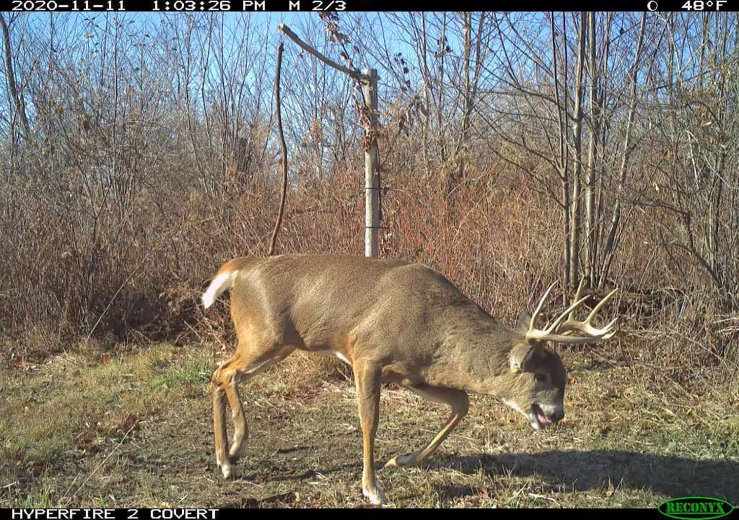 The 10 weirdest deer of the year
