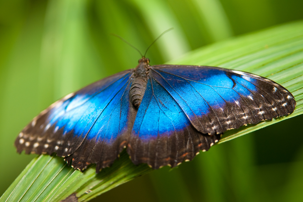 We can soon thank butterfly tongues for better cancer treatments and vaccines