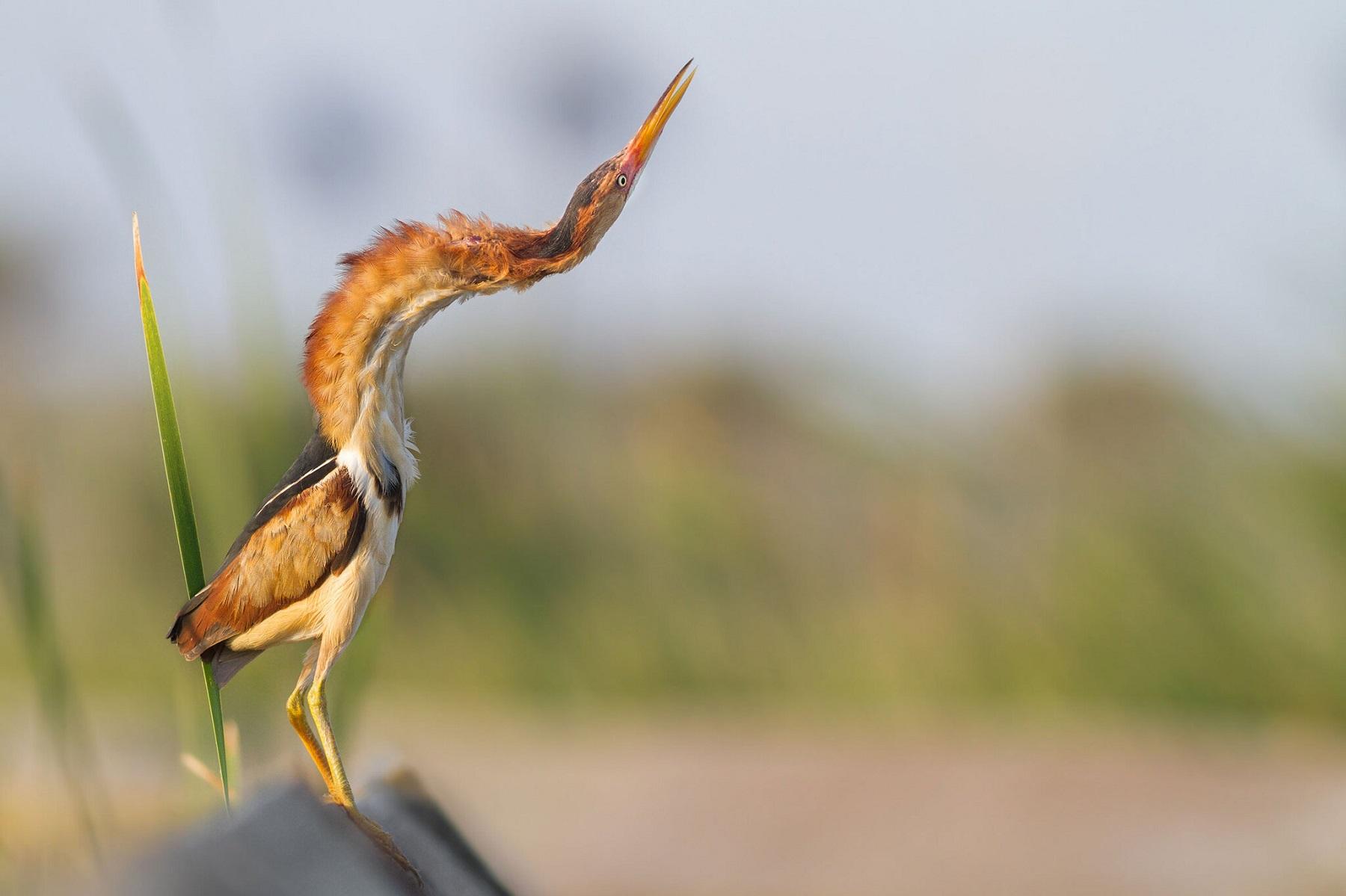 Fifteen bird photos that will make your heart sing
