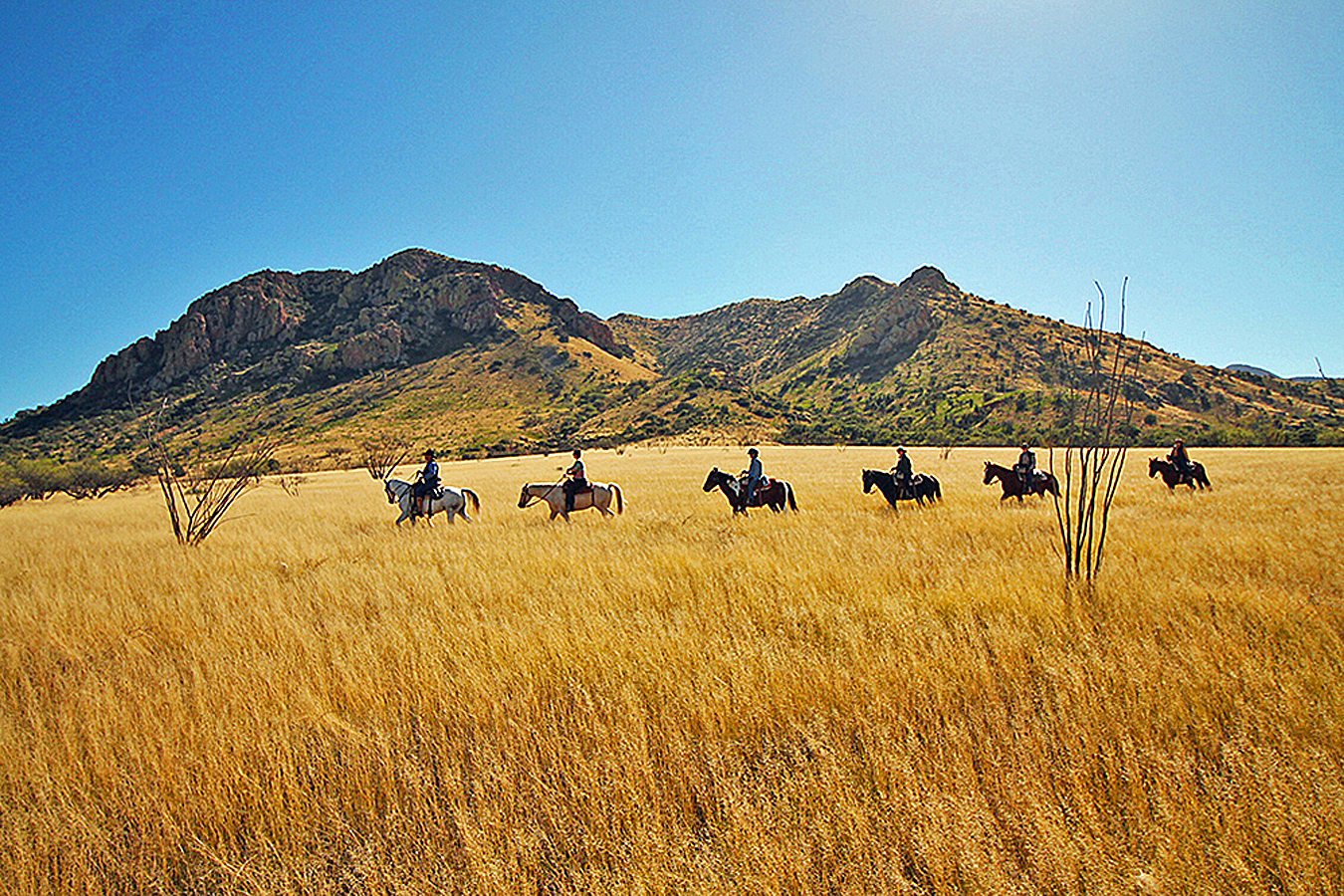 Want to plan a dude ranch vacation but don't know where or how to begin your research? A great place to start is the newly launched, easy-to-navigate website created by the Dude Ranchers Association.