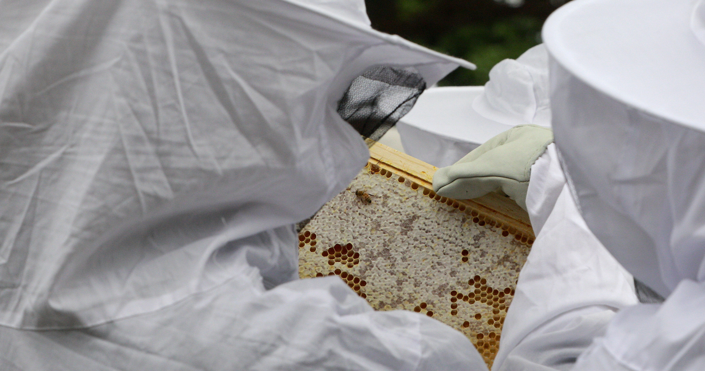 """Richard Miscovich is the co-adviser for Johnson & Wales's """"Bee the Change"""" student club, which has two beehives to teach students how to become beekeepers and to produce honey on campus."""