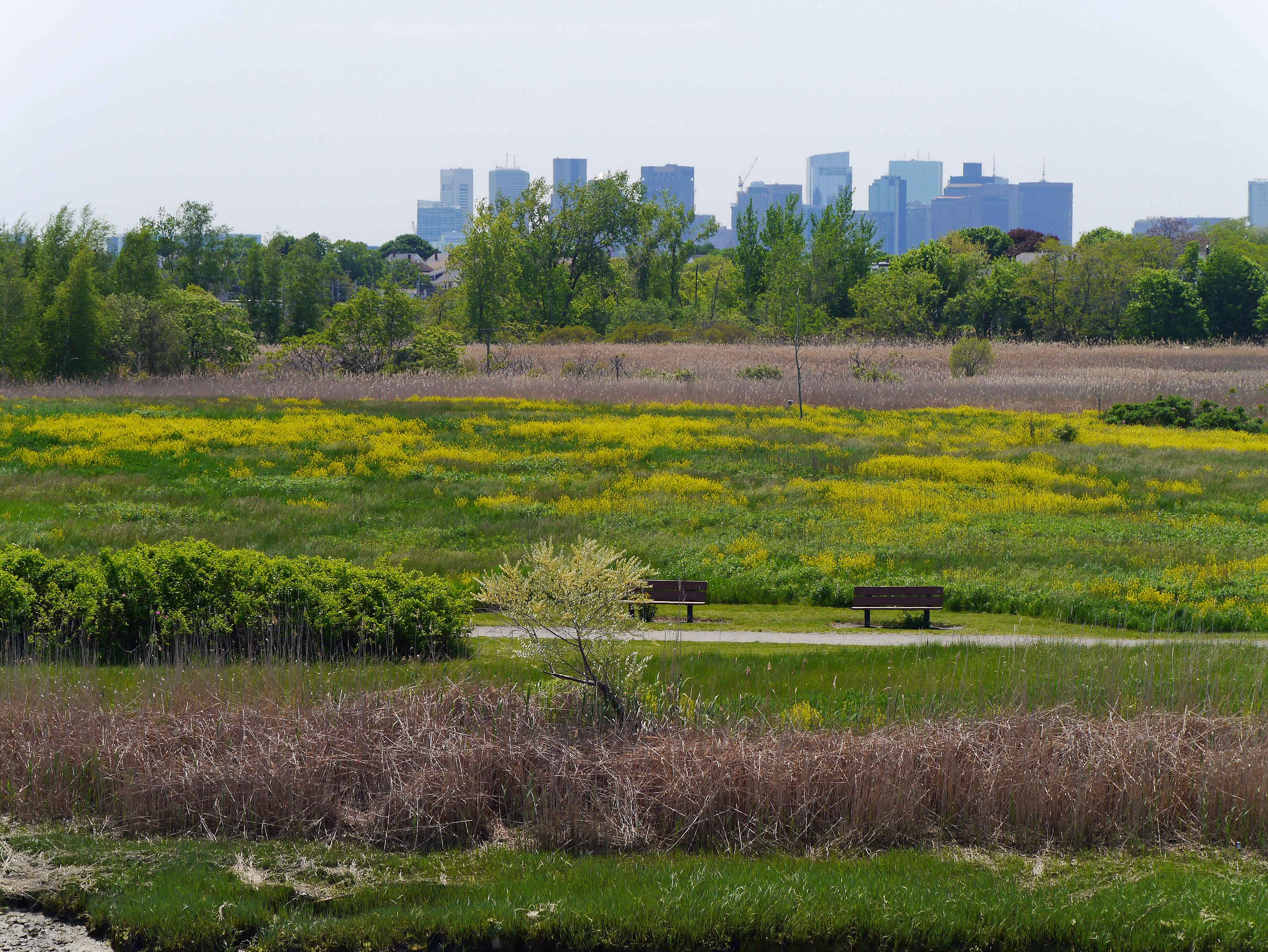 Belle Isle Marsh is a thriving maze of narrow canals interspersed with bog and marsh vegetation.