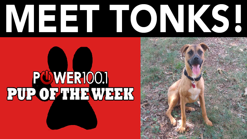 Power Pup of the Week