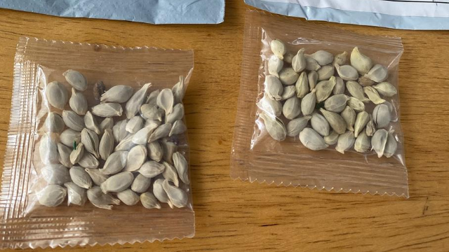 Washington residents asked to turn in mysterious seeds sent in mail from other countries