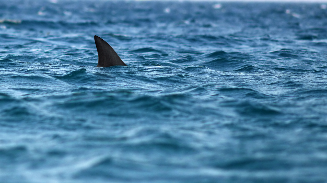 Pennsylvania girl gets 42 stitches after suspected shark attack in Ocean City, Maryland