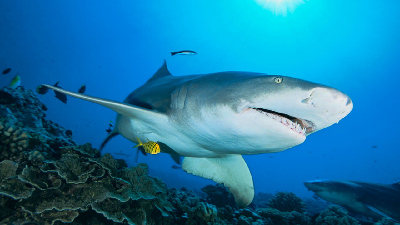 Shark bites lifeguard on Hilton Head Island