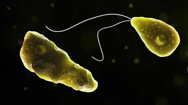 Rare 'brain-eating' amoeba confirmed in Florida - WPXI Pittsburgh thumbnail