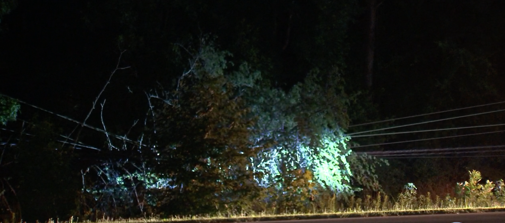 Massive tree falls on power lines, knocks out power to hundreds in north Charlotte