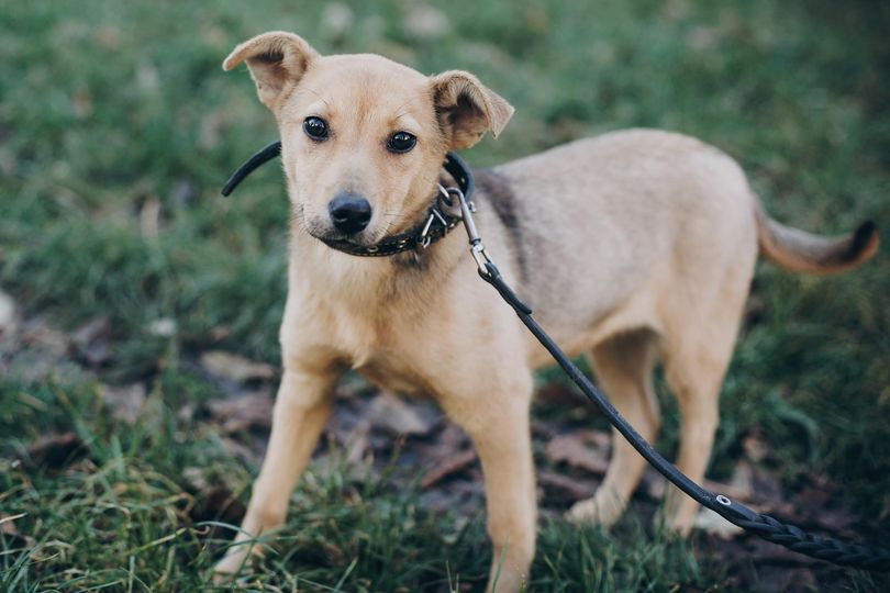 ARC exceeds maximum capacity for pups; Seeks help from the public