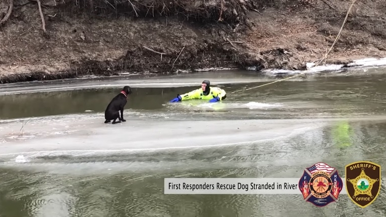 First responders rescue dog stranded on chunk of...