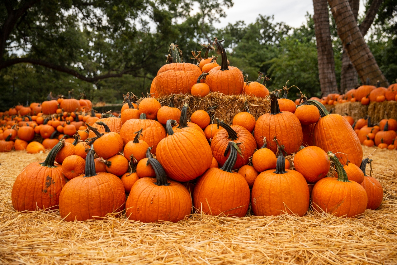 Autumn At The Arboretum And Other Top Spots For Pumpkin Fun In D Fw