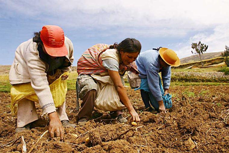 Noticias sobre agricultura | NOTICIAS GESTIÓN PERÚ