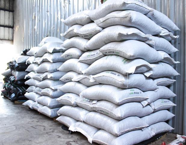 Madre de Dios: empresa de agricultores exporta 104 toneladas de cacao orgánico a Italia | FOTOS