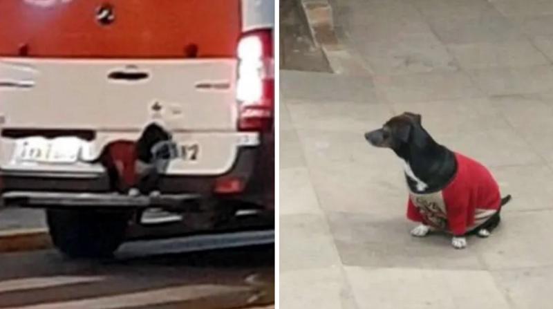 Perrita logra subir a ambulancia para acompañar a su dueño | VIDEO - AP Noticias Perú