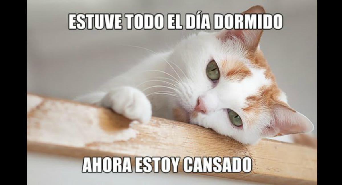 Los mejores memes del Día Internacional del Gato