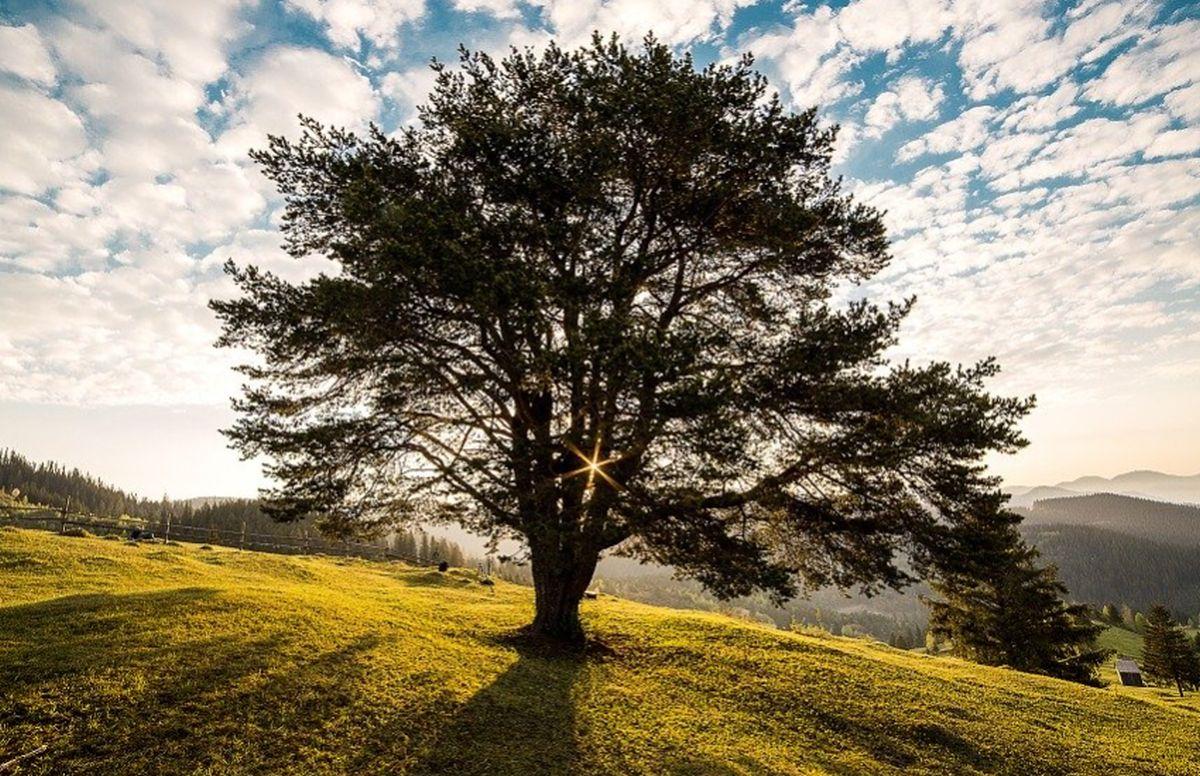 Día del Árbol: ¿por qué se conmemora en el Perú el 1 de septiembre?