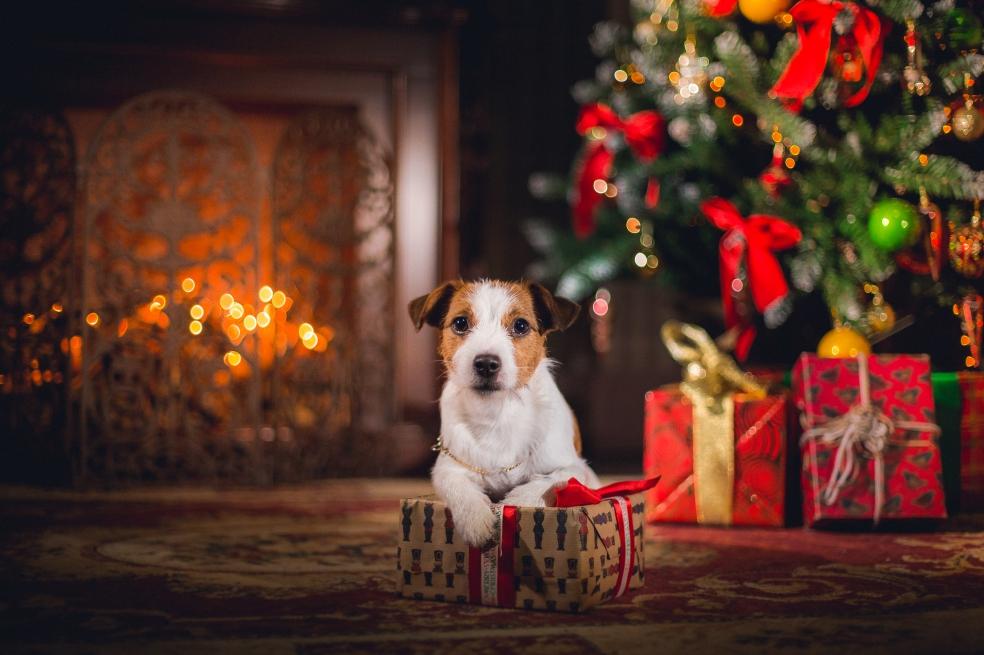 Qué regalarles a las mascotas en Navidad?   EL ESPECTADOR