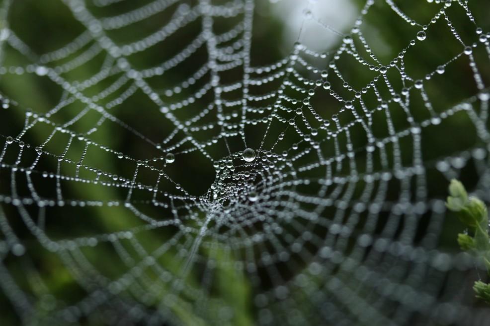 La seda de araña es fuerte