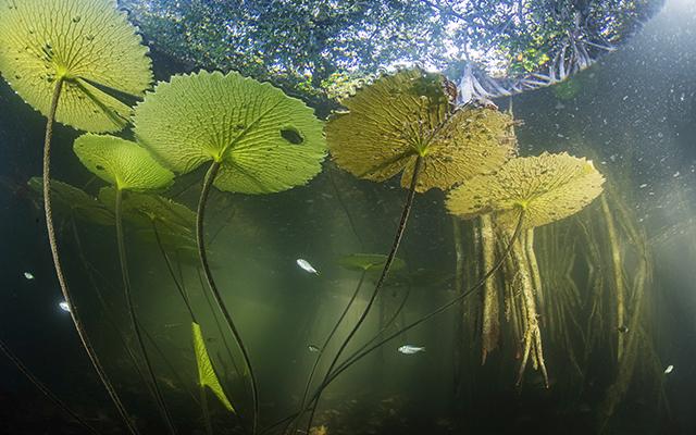 Yucatán tiene un bosque secreto… y puede ser clave contra calentamiento global