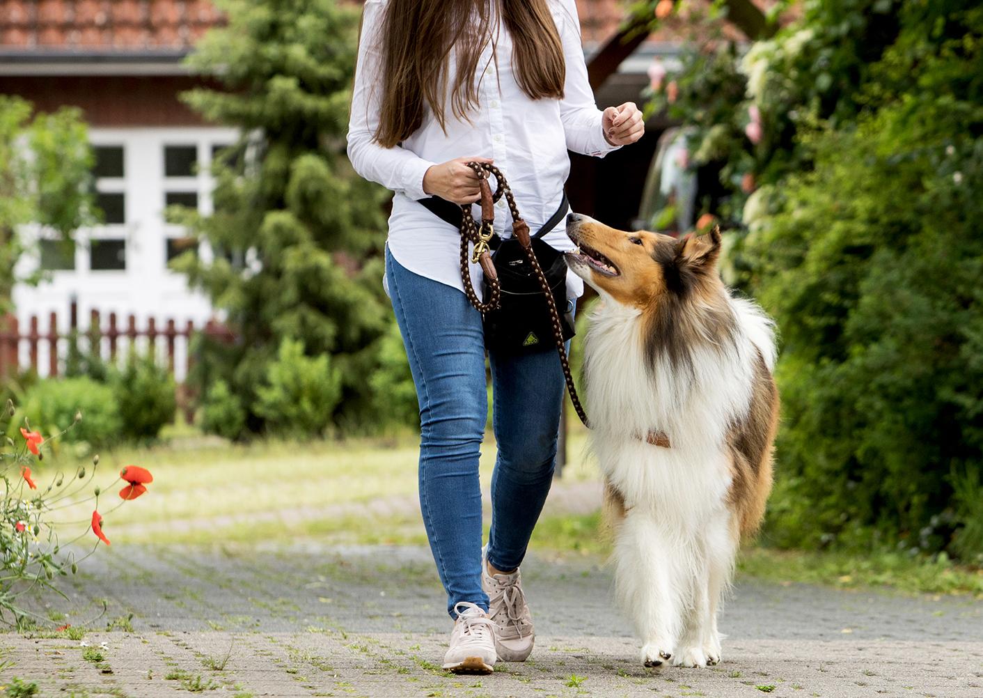 No es bueno tirar de la correa del perro al pasear | Sociedad | La Revista  | El Universo
