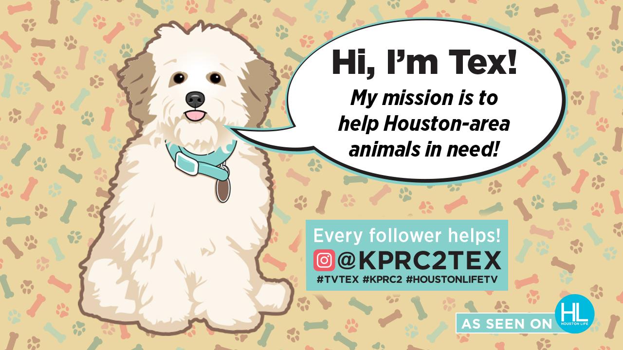 Tex's Poundation As Seen On Houston Life