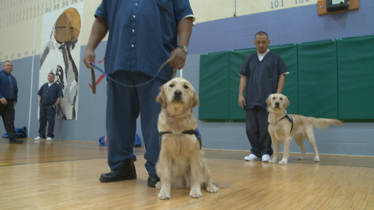 Canines And Criminals Team Up In Michigan Prisons