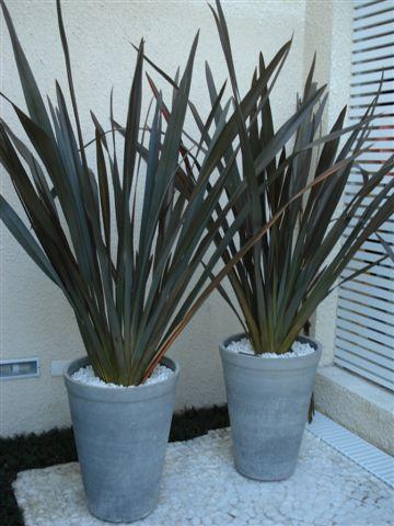 Una planta que es tendencia para colocar en galerías y generar mayor amplitud al espacio.