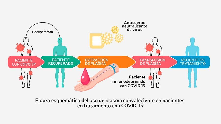 Un grupo de 60 investigadores, la mayoría argentinos, realiza ad honorem protocolos de emergencia para el uso de plasma. Fuente: CPC-19.