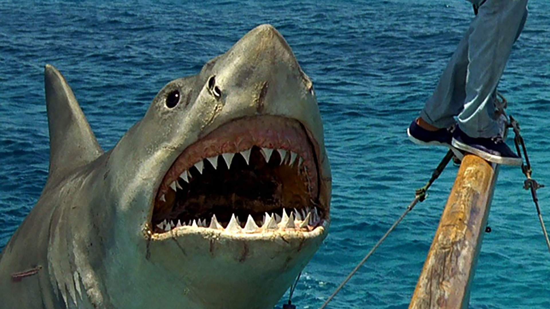 Ataque Tiburon Estrella Porno Fake ⚡ infobae: a 45 años de tiburón: un rodaje desastroso, un