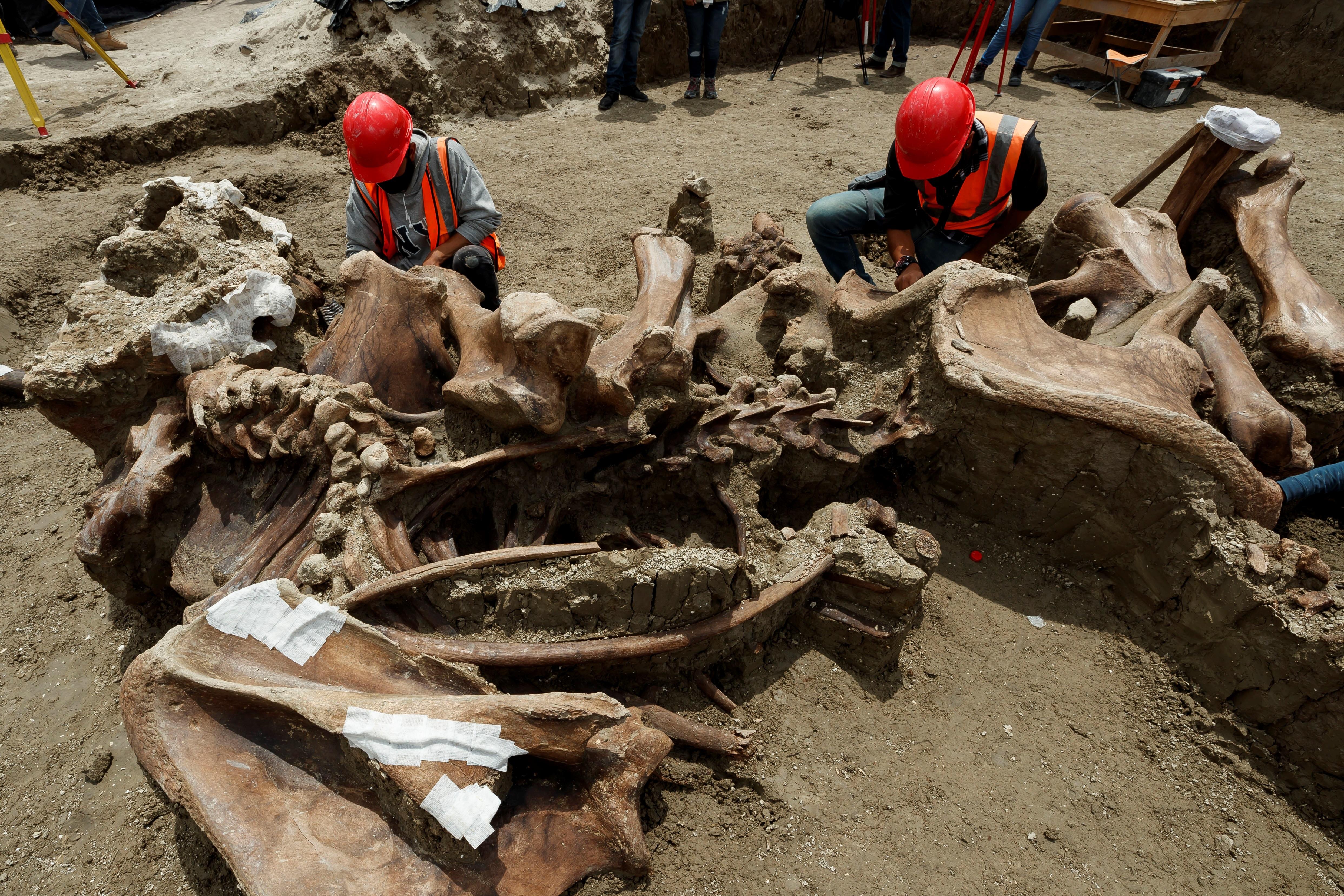 Los investigadores creen que el alto número de restos encontrados obedece a que esta zona correspondía al lago de Xaltocan, donde había abundante agua y alimento para los animales.