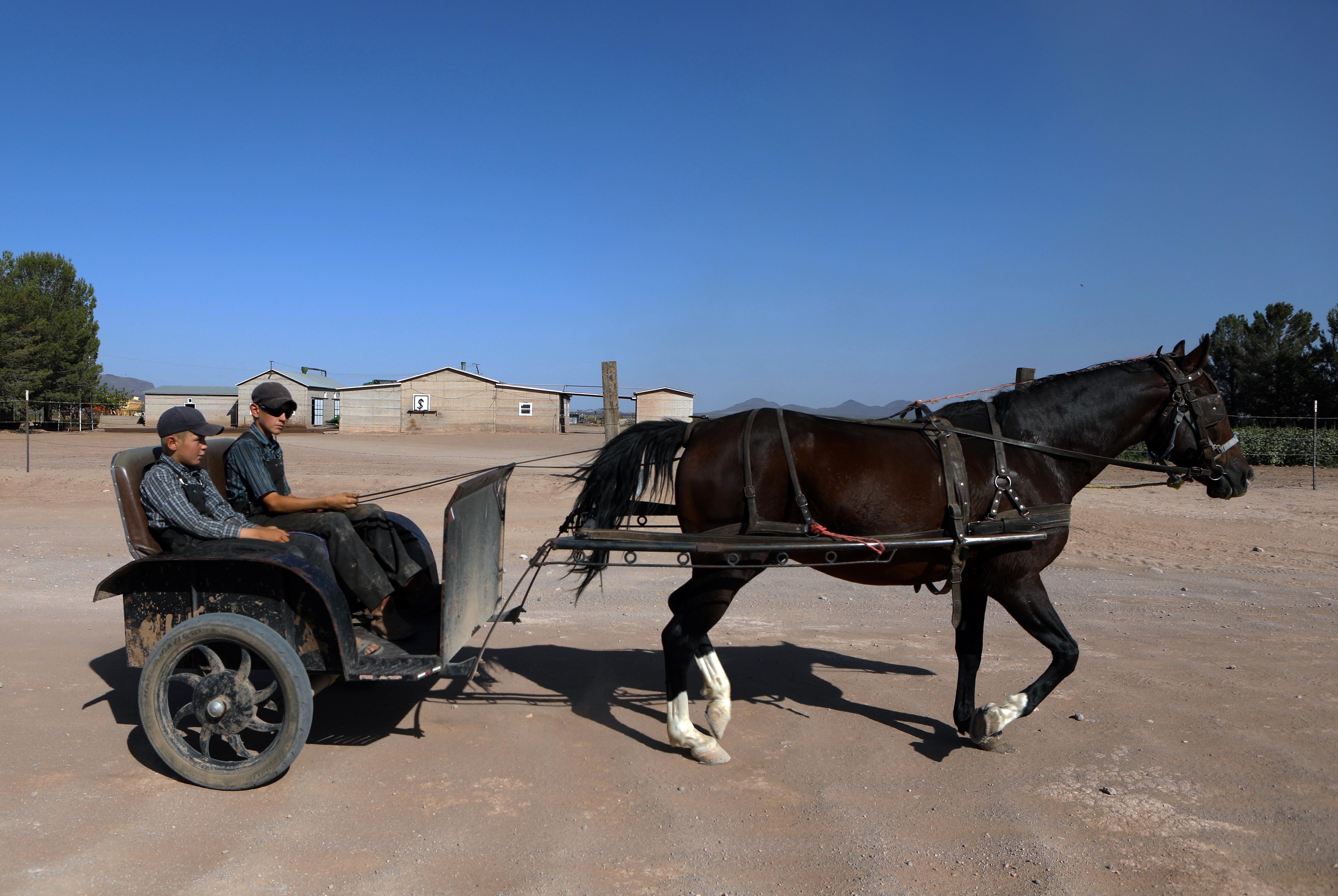 Jóvenes menonitas viajan en un carro tirado por caballos en una comunidad menonita en el municipio de Ascensión, estado de Chihuahua, México, el 26 de septiembre de 2020.