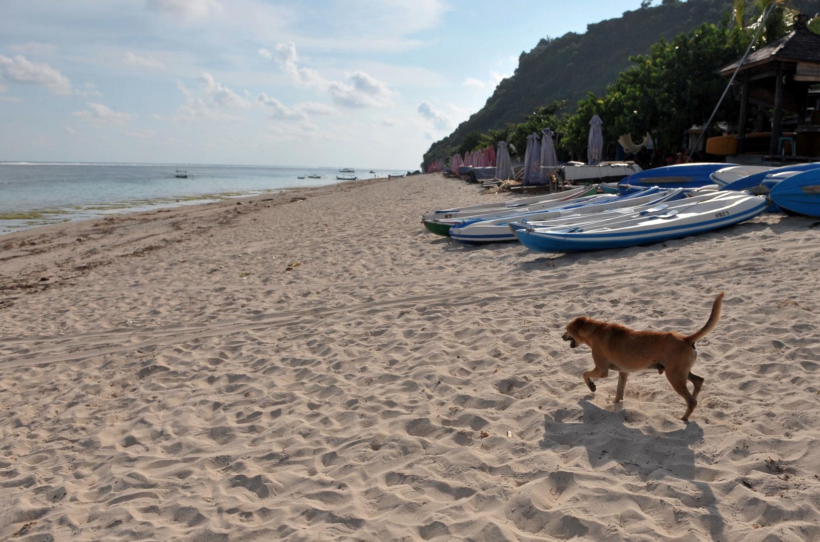Un perro disfruta de toda la playa para él, en Badung, Bali (Antara Foto/Fikri Yusuf/ via REUTERS)