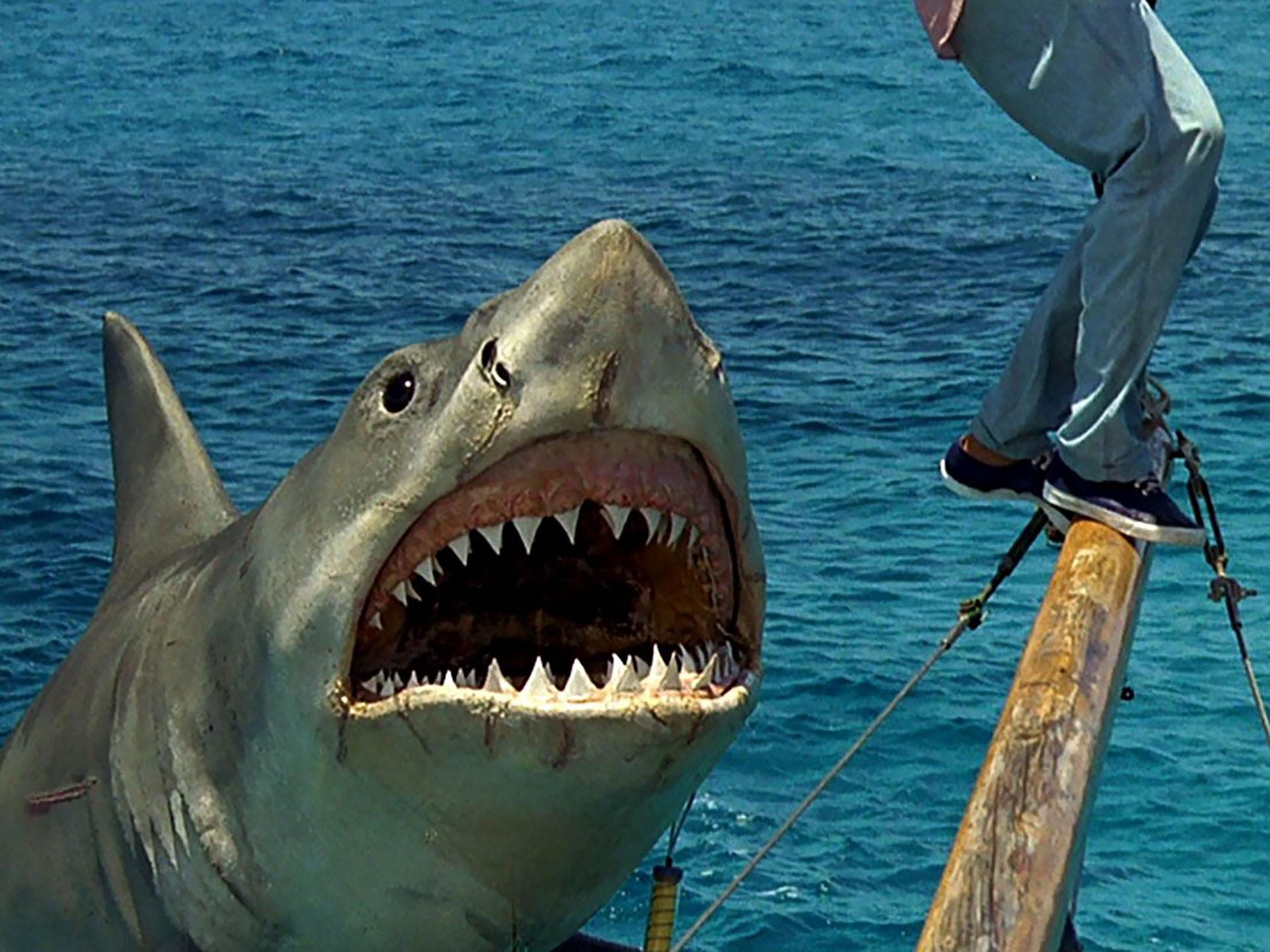 A 45 Años De Tiburón Un Rodaje Desastroso Un Animal Que No Funcionaba Actores Que Se Odiaban Y Peligro De Naufragio Infobae