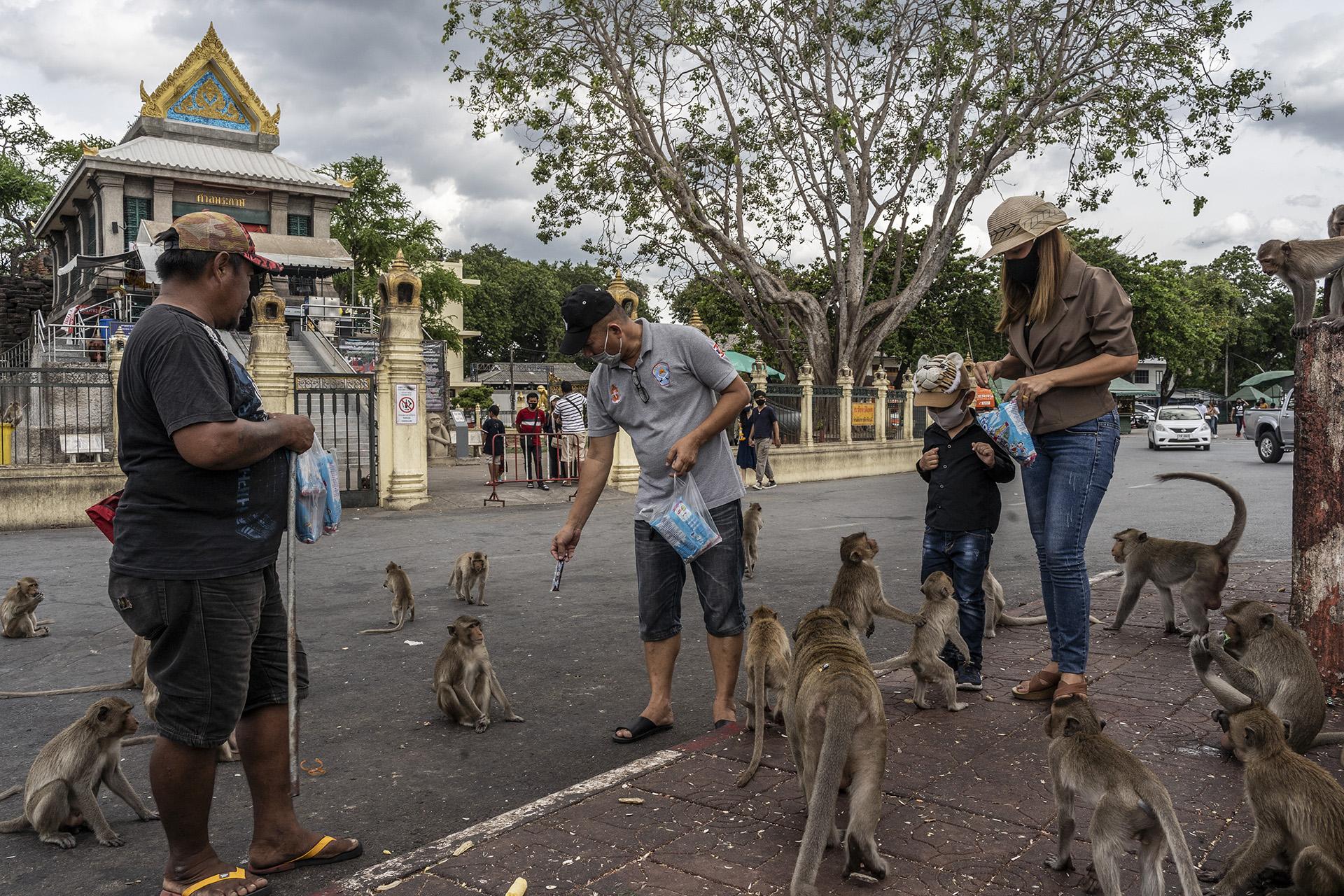 Un guía (a la izquierda) vende galletas a los turistas que alimentan a los monos frente al templo de Phra Kan en Lopburi