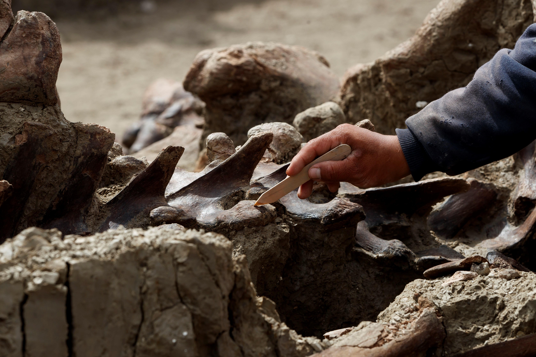 Ajenos a los hallazgos, que están dispersos por toda la construcción, miles de obreros continúan su marcha, al igual que decenas de excavadoras y camiones que no cesan de remover tierras y transportar materiales.