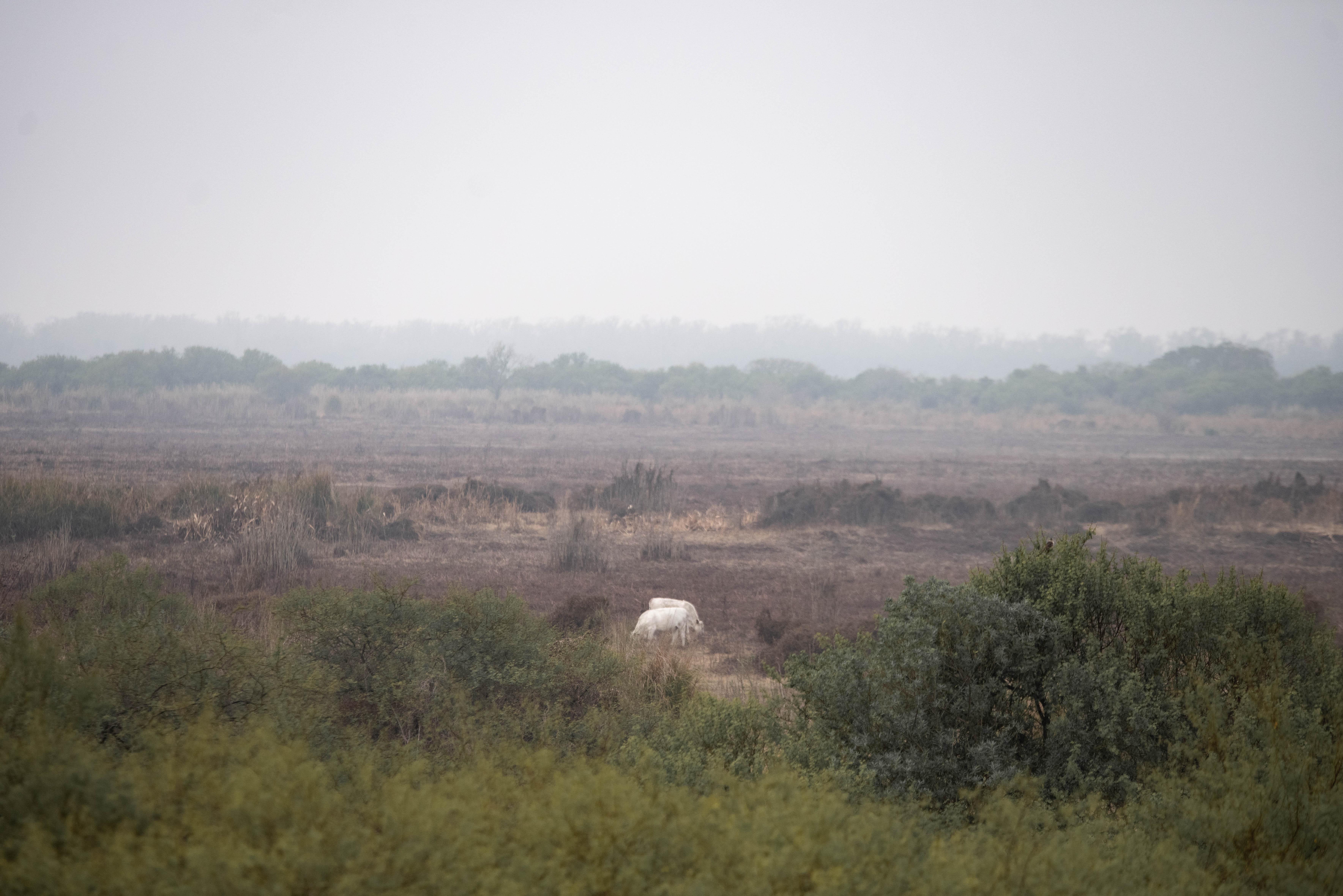 La situación que se vive en el lugar es alarmante: los incendios intencionales ya quemaron unas 90 mil hectáreas y algunas viviendas de la zona corren riesgo de ser alcanzadas por el fuego, que es combatido por decenas de brigadistas