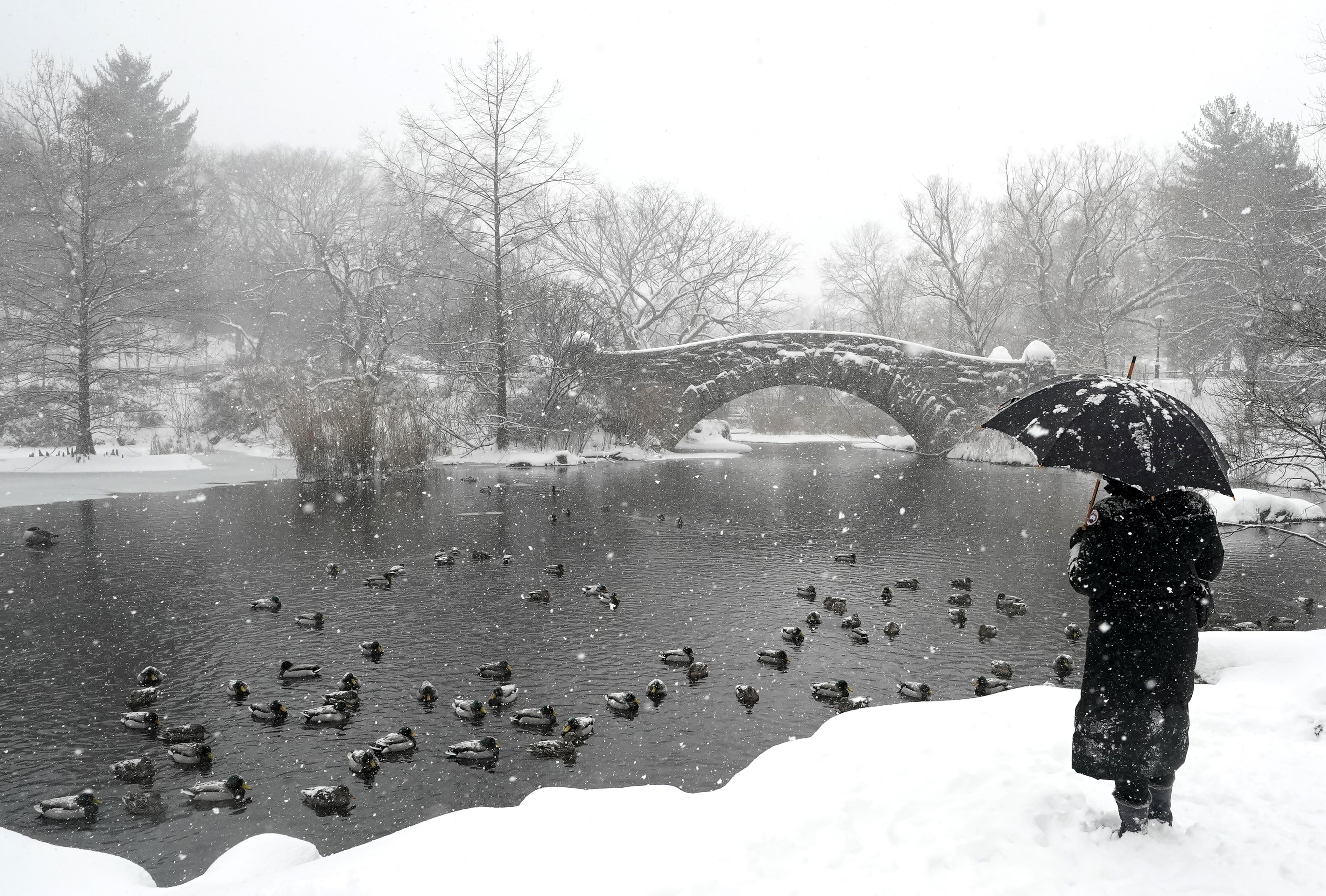 Una persona parada frente al puente Gapstow en Central Park (TIMOTHY A. CLARY / AFP)