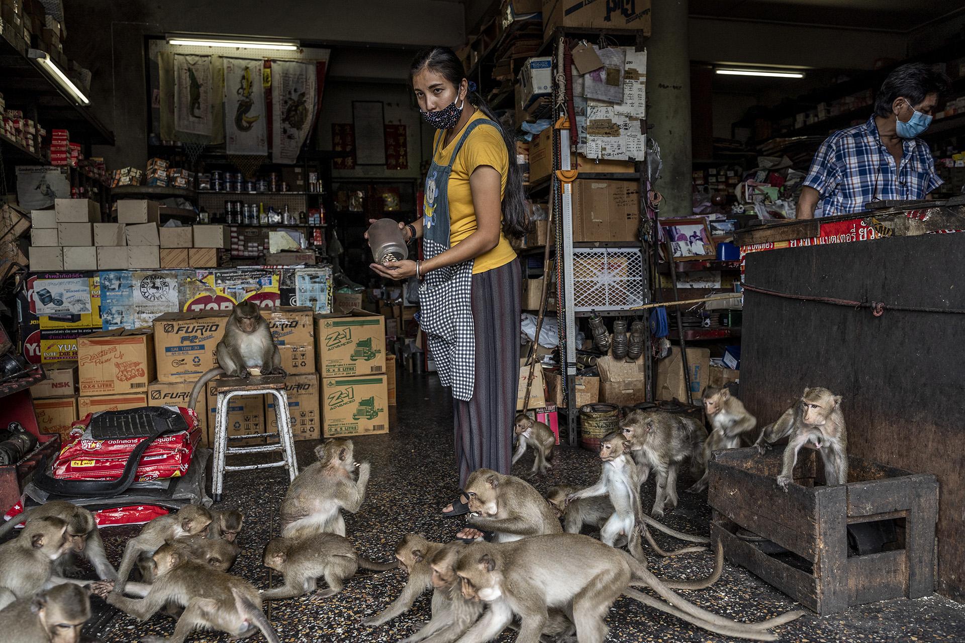 Los monos han copado el interior de las tiendas de Lopburi