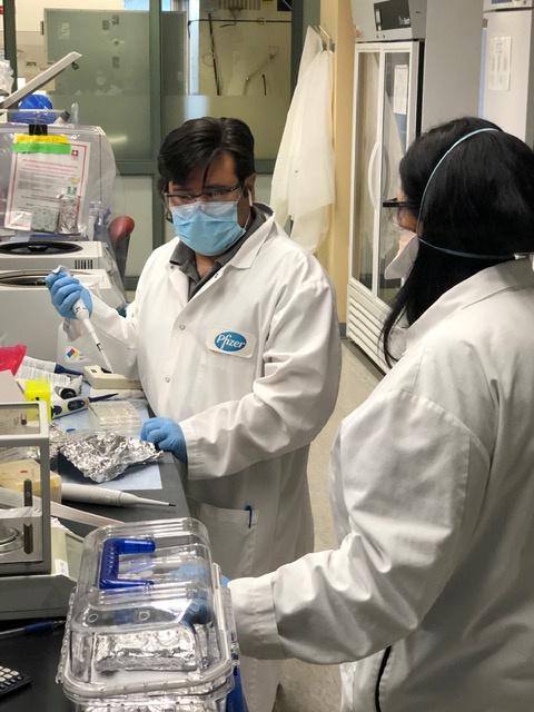 Científicos e investigadores trabajan en una potencial vacuna para la enfermedad del coronavirus (COVID-19) en el laboratorio de Pfizer en Pearl River, Nueva York, el 5 de mayo de 2020 (Pfizer/Handout via REUTERS)