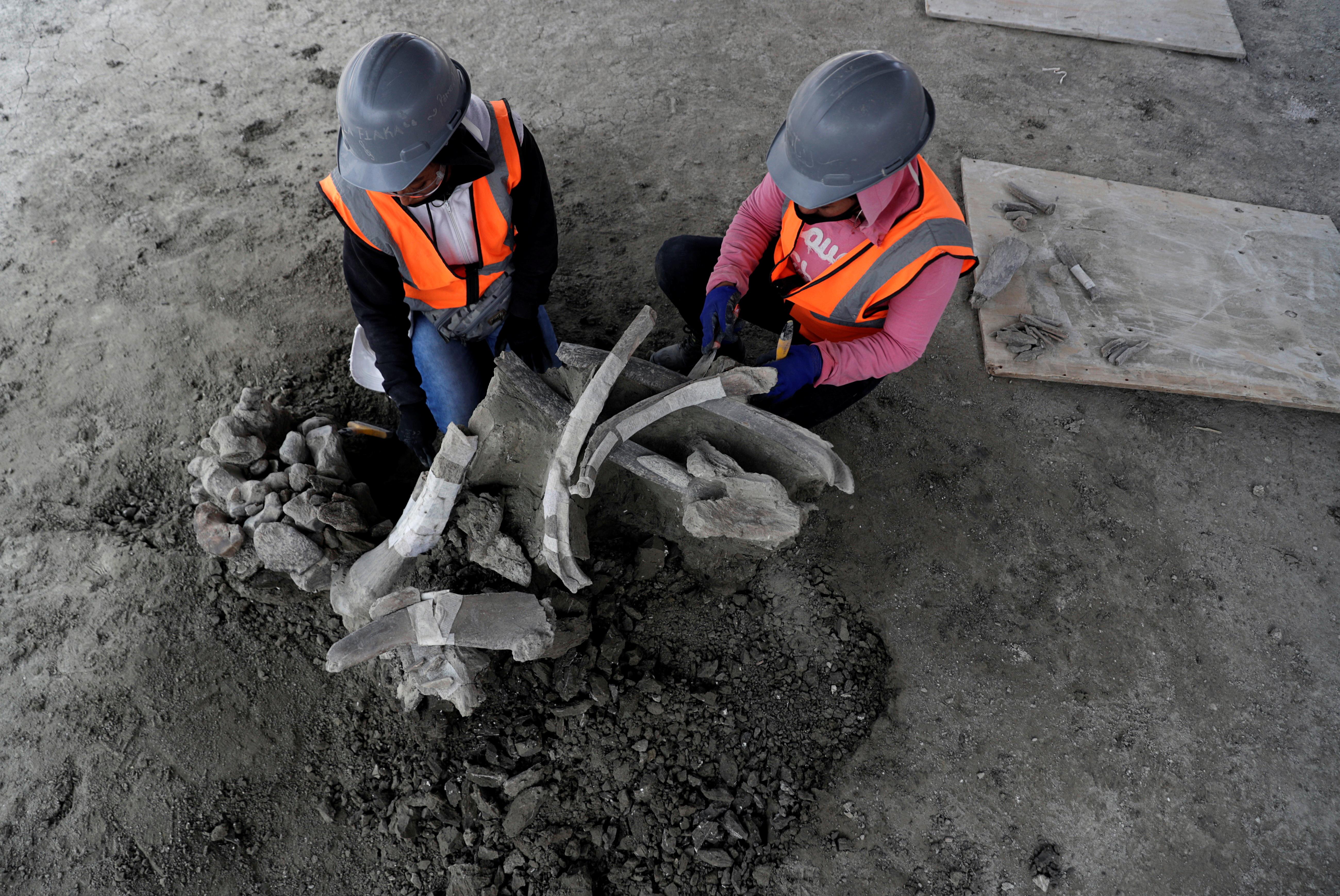 Una vez que las excavaciones culminen, Manzanilla dijo que el sitio, ubicado a unos 50 kilómetros al norte del centro de Ciudad de México, podría rivalizar con otros en Estados Unidos y Siberia como el mayor depósito de esqueletos de mamut del planeta.
