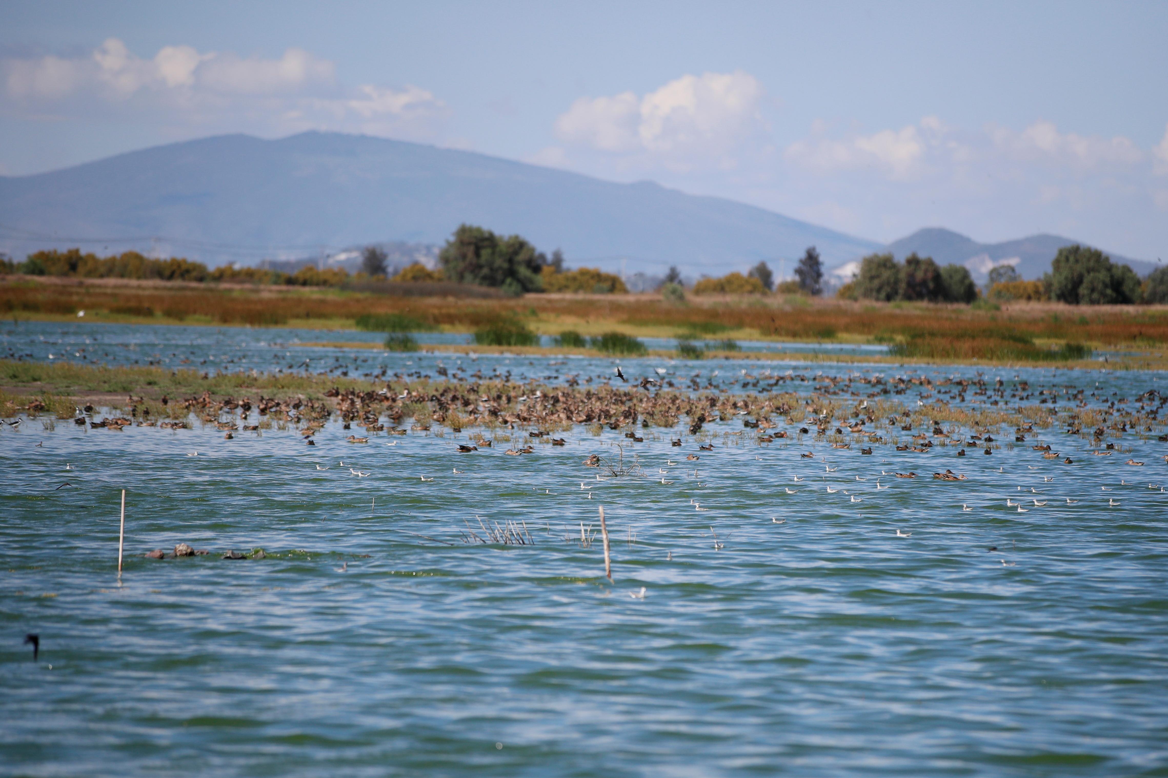 Los pájaros se deslizaban en un estanque debajo de columnas de barras de acero entrecruzadas que debían convertirse en una terminal que recibiría a unos 70 millones de pasajeros al año. Las piezas se venderán como chatarra.