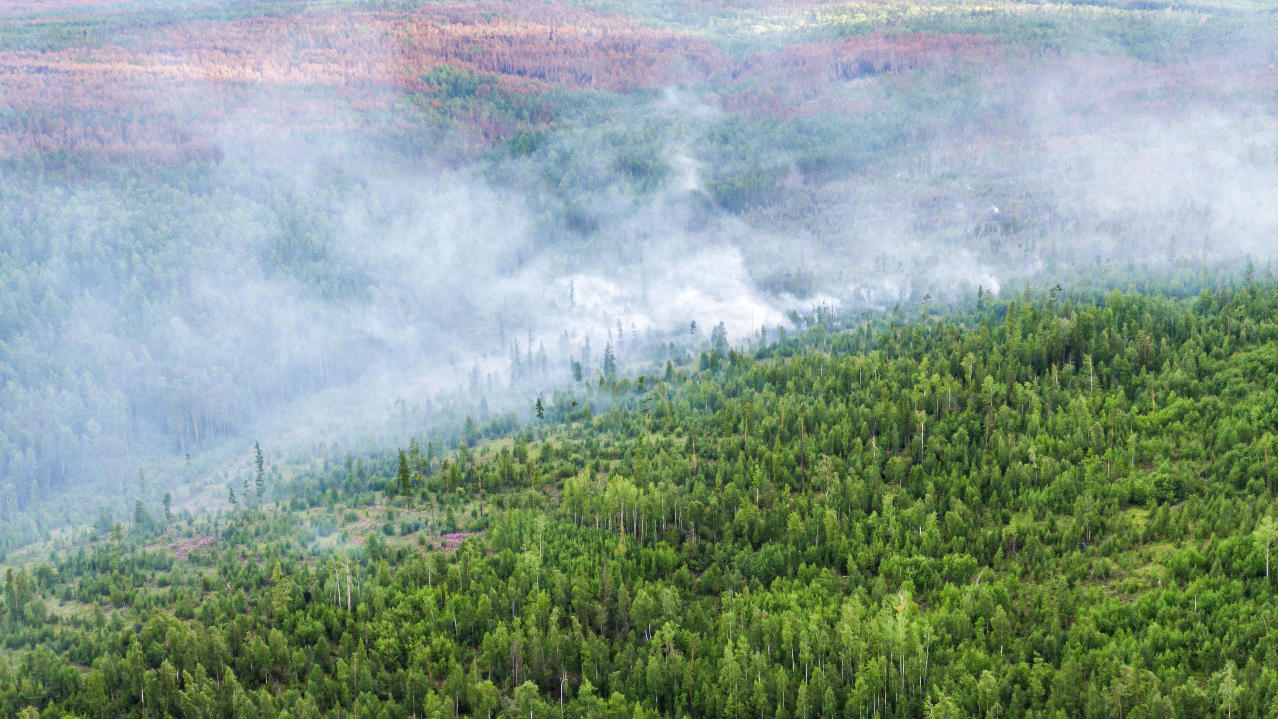 Humo en un bosque de la región de Krasnoyarsk (Julia Petrenko/Greenpeace via REUTERS)